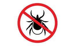 Komary i kleszcze - burzyciele letniego spokoju